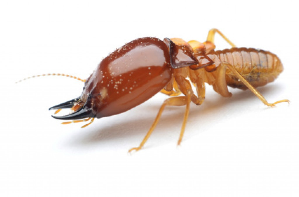 termite1-1024×678